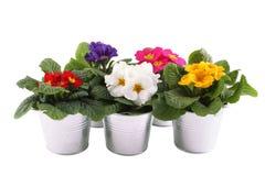 Muchas plantas potted de la primavera Imagenes de archivo
