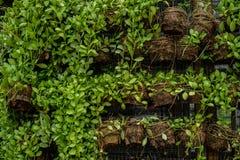 Muchas plantas verdes en potes en la pared Fotografía de archivo libre de regalías
