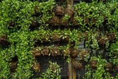 Muchas plantas verdes en potes en la pared Imagen de archivo libre de regalías