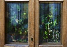 Muchas plantas y flores de la casa detrás de la ventana o de la puerta de madera del país fotografía de archivo