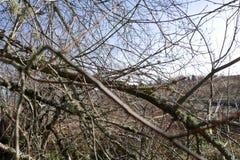 Muchas ramas en Oregon Fotografía de archivo