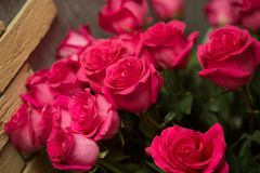 Muchas rosas rojas Fotos de archivo libres de regalías
