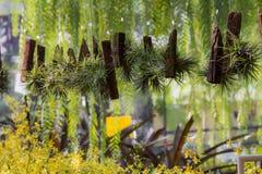 Muchas tiendas del árbol con las plantas, los helechos y las flores Falta de definición del fondo Imágenes de archivo libres de regalías