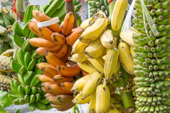 Muchas variedades de plátanos Imágenes de archivo libres de regalías