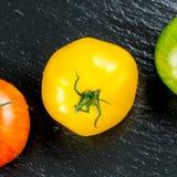Muchas variedades de tomates coloridos Imágenes de archivo libres de regalías