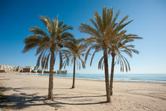 Muchavista sand beach Royalty Free Stock Image