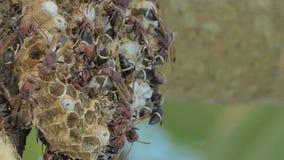 Muchedumbre de avispa en árbol