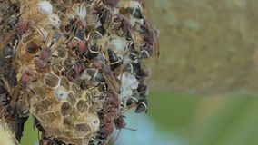 Muchedumbre de avispa en árbol almacen de metraje de vídeo