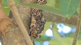 Muchedumbre de avispa en árbol almacen de video