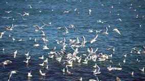 Muchedumbre de gaviotas en el agua almacen de video