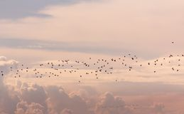 Muchedumbre de pájaros imagen de archivo libre de regalías