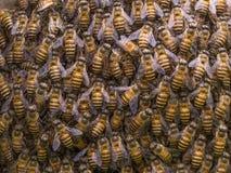 Muchedumbre del panal de la estructura de las abejas Fotografía de archivo libre de regalías