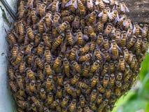 Muchedumbre del panal de la estructura de las abejas Fotografía de archivo