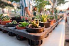 Mucho cactus Fotos de archivo