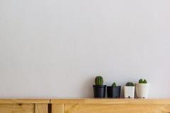 Mucho cactus en la tabla de madera en el fondo blanco de la pared Imagenes de archivo