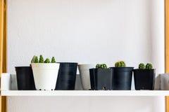 Mucho cactus en la tabla de madera en el fondo blanco de la pared Fotos de archivo