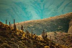 Mucho cactus en las montañas en una puesta del sol imagenes de archivo