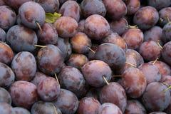 Mucho ciruelos púrpuras Imagen de archivo libre de regalías