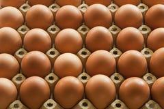 Mucho Eggs en el empaquetado del cartón del huevo Imágenes de archivo libres de regalías