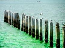 Mucho el soporte de la gaviota en pilar del abandono y el mar bicolor emergen Fotos de archivo