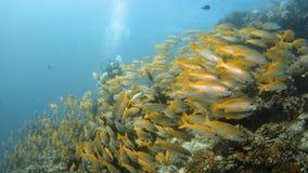 Mucho grupo amarillo de los pescados junto bajo el agua almacen de metraje de vídeo