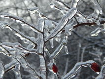 Mucho hielo en el briar Fotografía de archivo