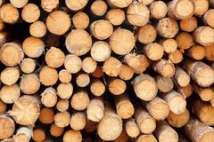 Mucho la madera de pino grande abre una sesión textura grande del fondo del Woodpile Imágenes de archivo libres de regalías