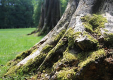 Mucho musgo verde que crece en el árbol en el parque durante Fotografía de archivo libre de regalías