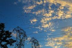 Mucho pájaro en un alambre Foto de archivo