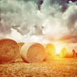 Mucho pajar seco en luz de la puesta del sol Fotos de archivo libres de regalías