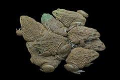 Mucho venta de la rana en granja en Tailandia en negro aislada imagen de archivo libre de regalías