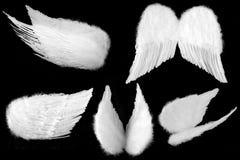 Muchos ángulos de las alas del ángel de guarda aisladas en el Bl Imagenes de archivo