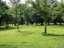 Muchos árboles en parque Foto de archivo