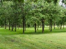 Muchos árboles en parque Imagen de archivo