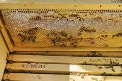 Muchos abejas de trabajo en el panal Fotografía de archivo