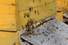 Muchos abejas del vuelo Imagenes de archivo