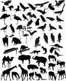 Muchos animales de las siluetas Imagenes de archivo