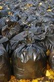 Muchos bolsos de basura negros en parque del otoño Imágenes de archivo libres de regalías