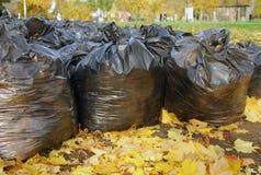 Muchos bolsos de basura negros en parque del otoño Imagenes de archivo