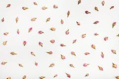 Muchos brotes de flor color de rosa en fondo del Libro Blanco Imagenes de archivo