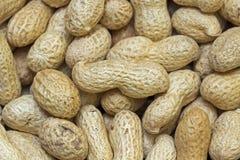 Muchos cacahuetes en shelles Fotografía de archivo