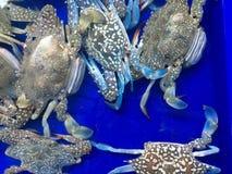Muchos cangrejos Imágenes de archivo libres de regalías