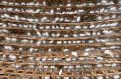 Muchos capullos de seda en los estantes de bambú Foto de archivo