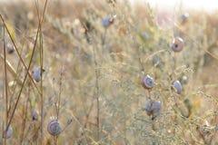 Muchos caracoles en la hierba seca Foto de archivo