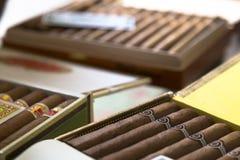 MUCHOS CIGARROS CUBANOS ORIGINALES Imágenes de archivo libres de regalías