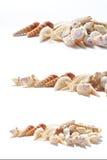 Muchos cockshells con una estrella de mar Foto de archivo libre de regalías