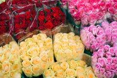 Muchos colores de rosas Fotografía de archivo libre de regalías