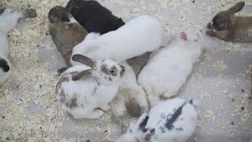 Muchos conejos descansan en una jaula almacen de metraje de vídeo