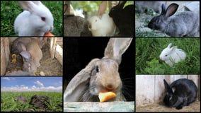Muchos conejos en la granja, criando conejos metrajes