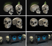 Muchos cráneos Stock de ilustración
